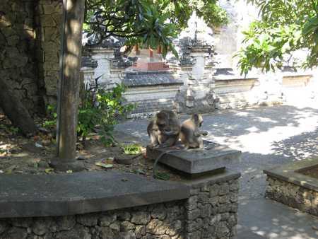 Monkey in Pura Uluwatu Temple Bali