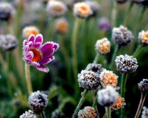 Παγωμένα λουλούδια