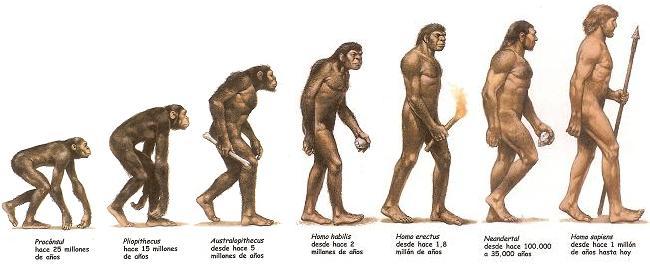 evolucion del ser humano: