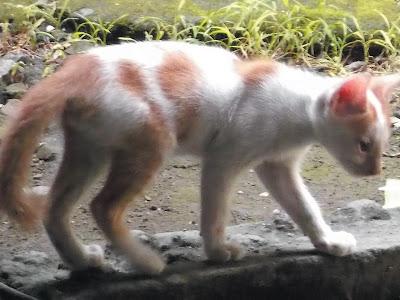 Foto-Foto Anak Kucing Lucu di Luar Jendela Kamar Kost Gue 15