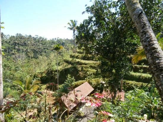 http://1.bp.blogspot.com/-PkW8HaCD8Bs/UpzVBqQbPvI/AAAAAAAAACw/T8T5LkD3eKc/s1600/cocoa.jpg