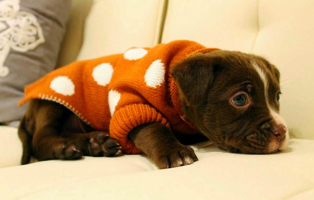 cute dog pictures, dog photos, funny dogs