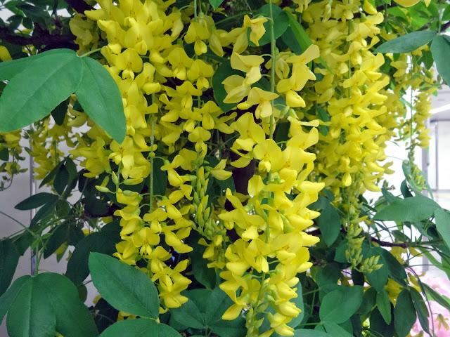 5月の花,花壇,池袋駅〈著作権フリー無料画像〉Free Stock Photos