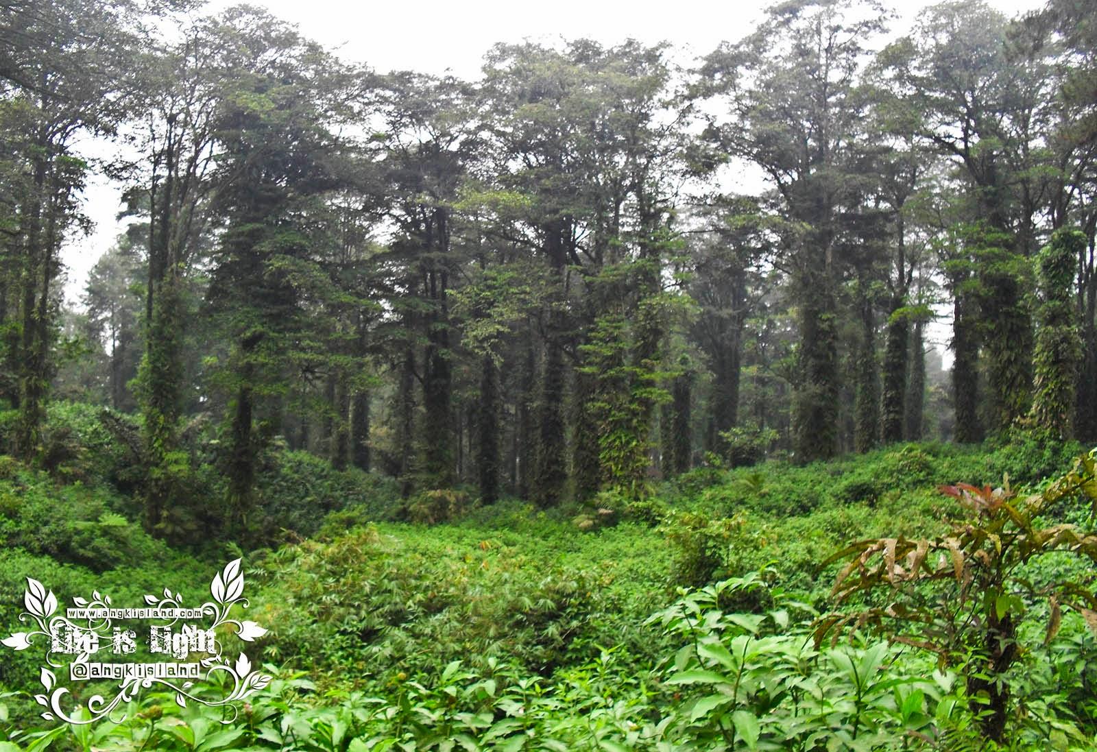 Hutan barturraden