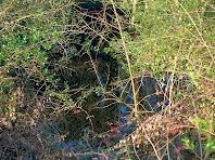 La bassa de Sant Jaume coberta totalment per la vegetació
