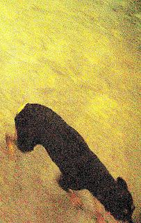 Economia de color gos com fuig