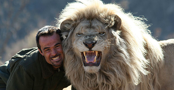 man attempts to hug a wild lion what happens next stunned me video. Black Bedroom Furniture Sets. Home Design Ideas