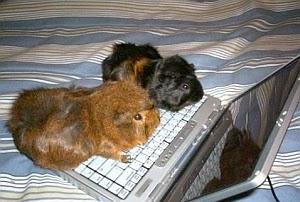 Imagenes Graciosas de Animales, Hamnsters