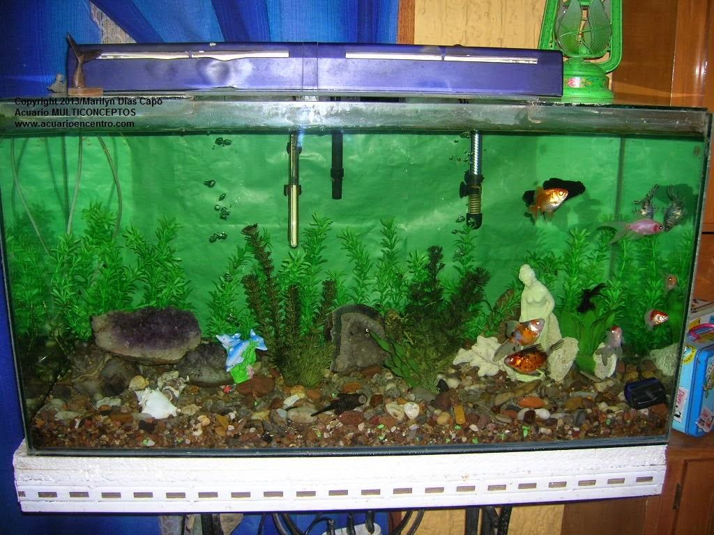 Peces tropicales de agua dulce fotos de los 17 acuarios for Mejores peces agua fria