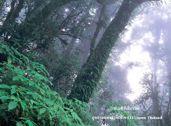 ป่าเฟิร์นโบราณ อุทยานแห่งชาติเขาหลวง Unseen Thailand