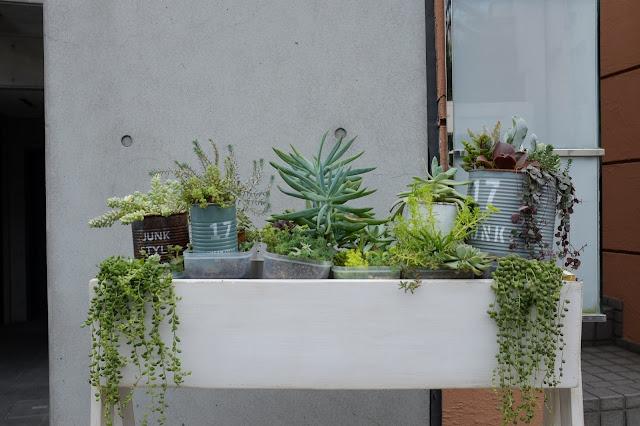 Japan tokyo pot plants