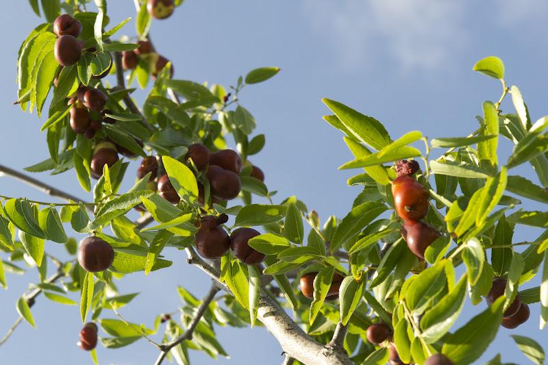 Bartoli garden marmellate e confetture tutto il dolce for Mapo frutto