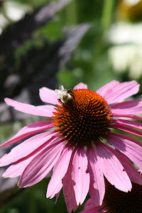 bee flower