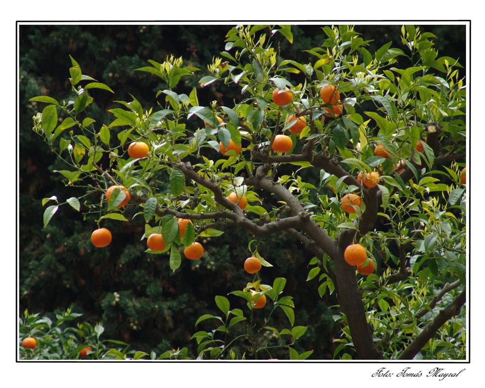 Plantas y flores arboles frutales for Plantas frutales