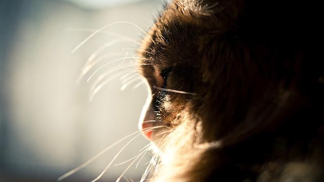 Very nice cat