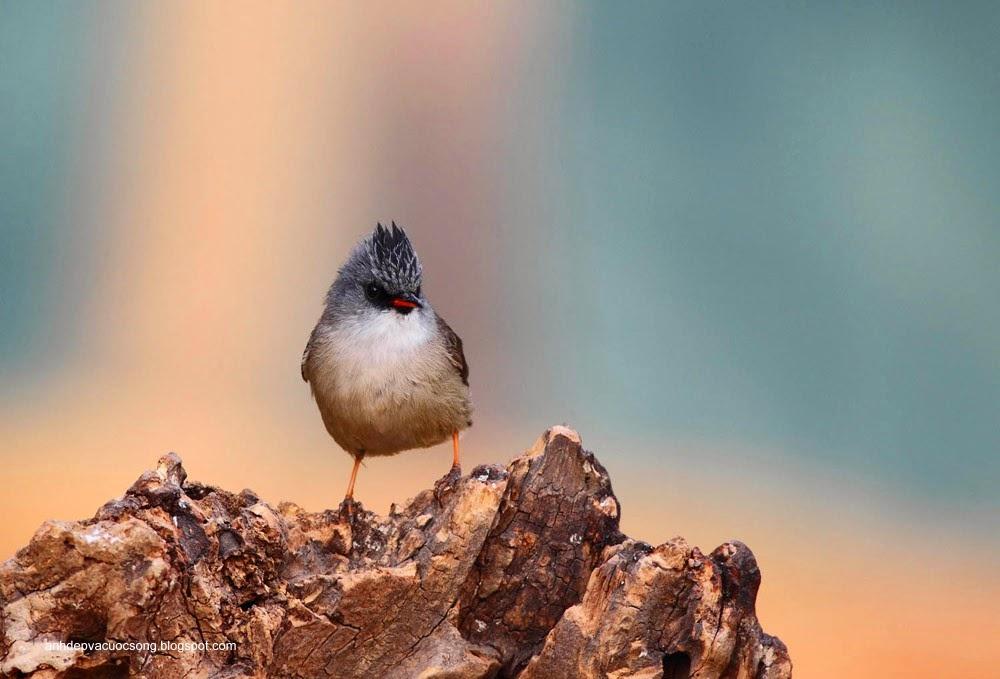 Ảnh động vật: Chú chim xinh đẹp 2 6