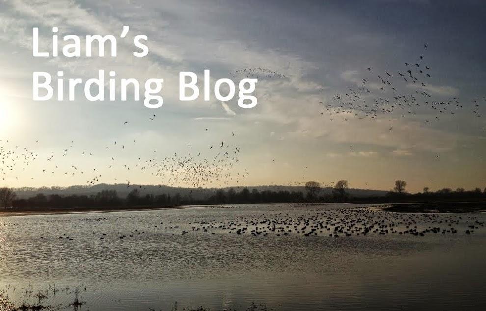 Liam's Birding Blog