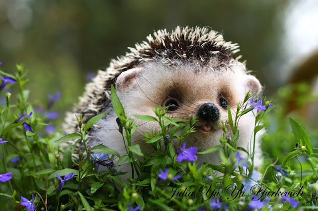 funny animals, baby hedgehog