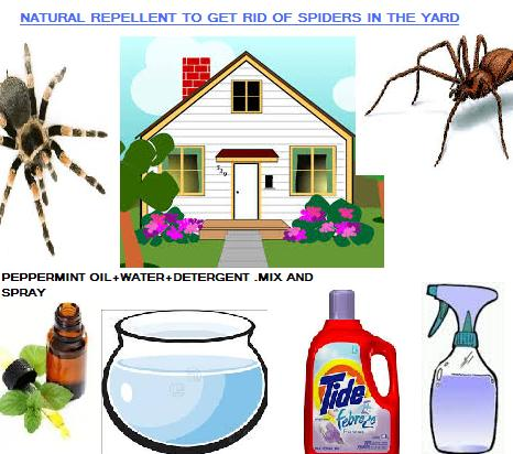 how to get rid of spiders in your yard