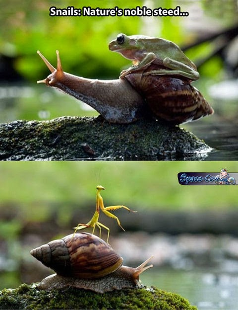 funny animals snail picture