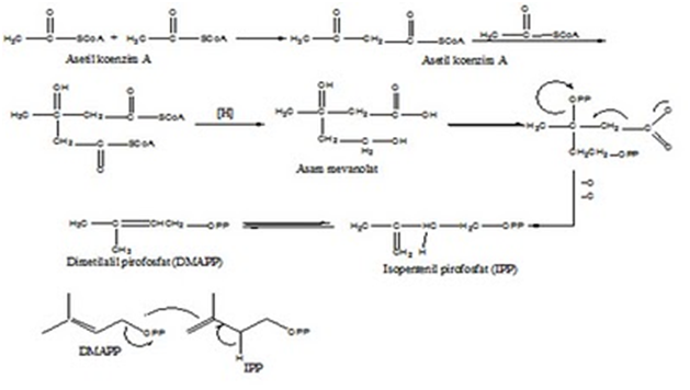 senyawa terpenoid steroid