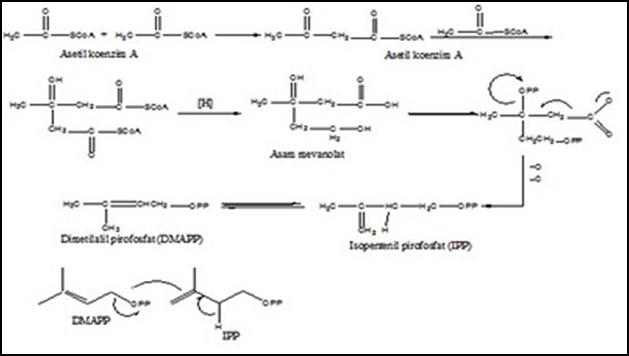 struktur umum steroid