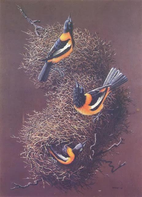 Worksheet. Aves de Venezuela con Historias
