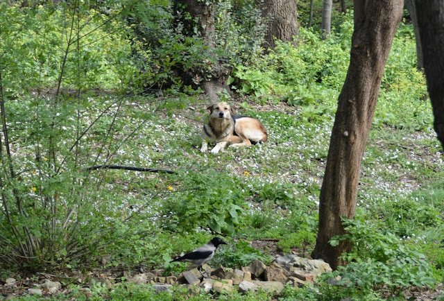 Yildiz Park Dogs Istanbul