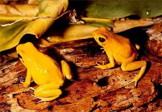 Top 10 Most Wanted Frogs On Earth