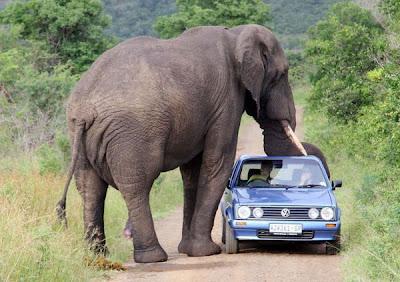 kruger national park africa elephant
