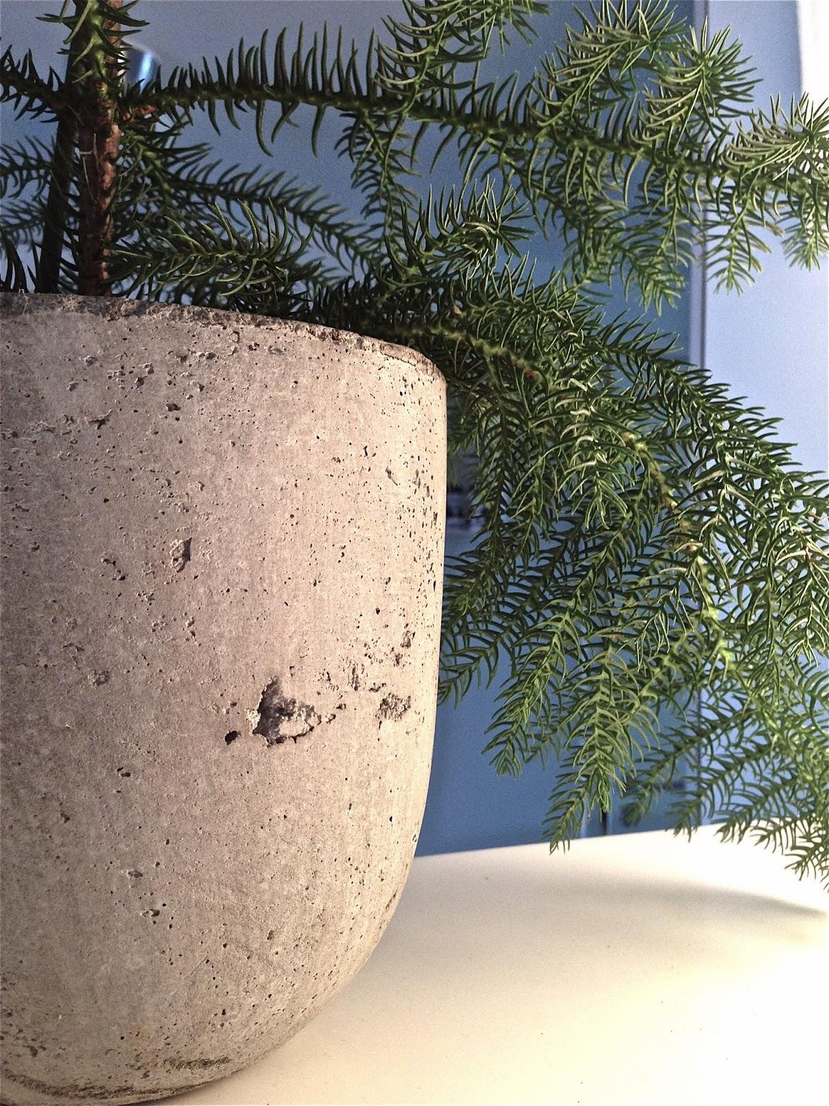 Granit, concrete, flowerpot