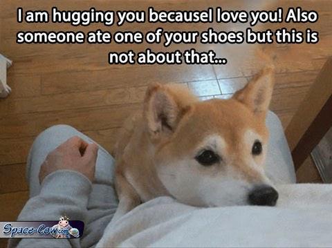funny dog shiba picture