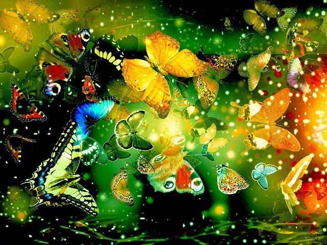 16728-Beautiful Butterflies Animal HD Wallpaperz