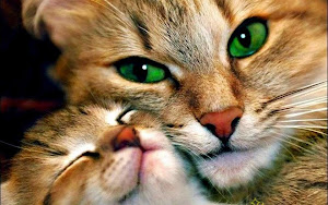 Feline love! Cat mom & her kitten.
