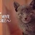 8 razones porque las personas aman a los gatos