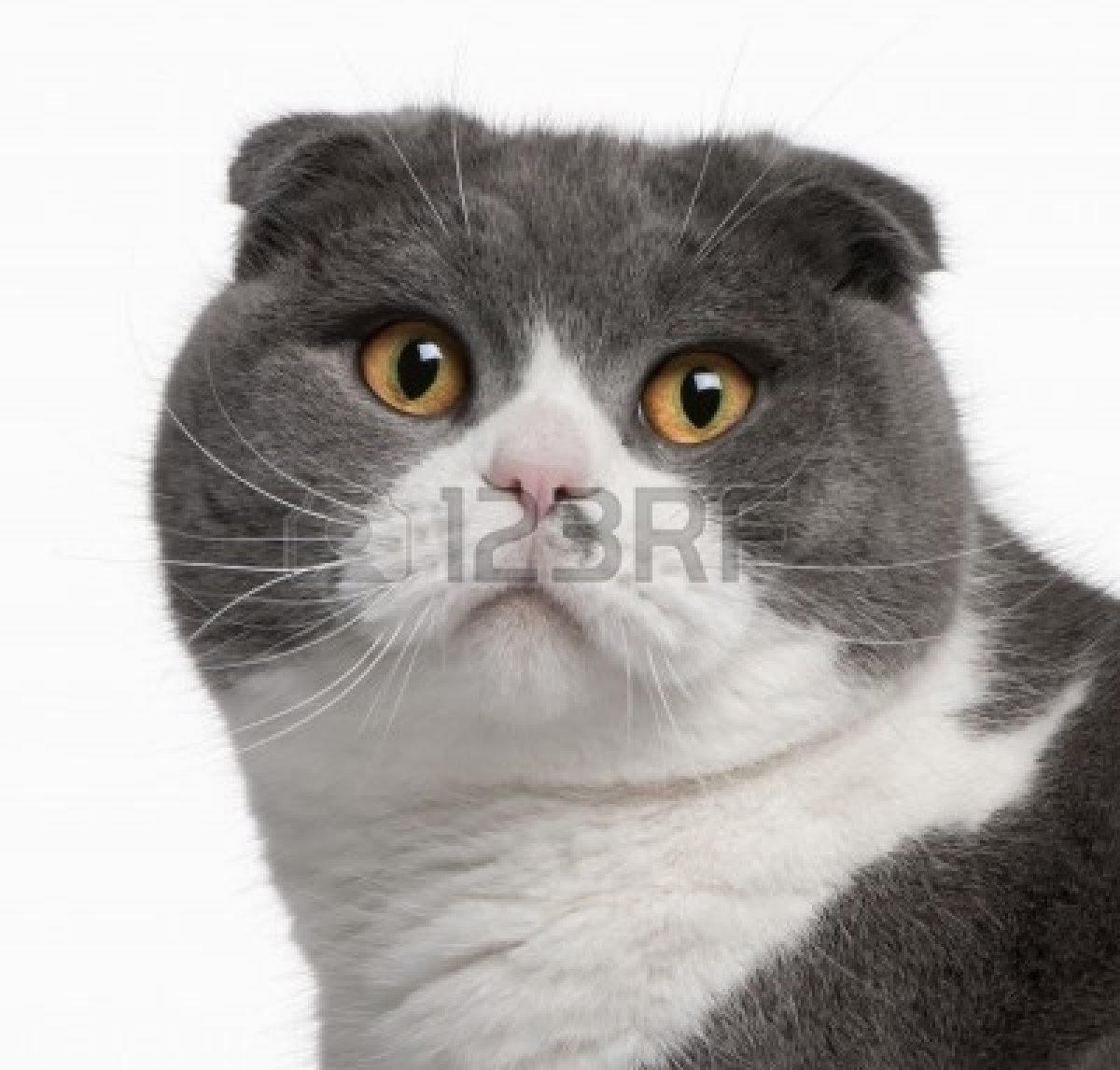 Kucing Kucing Terlucu Dan Tercantik Di Dunia Bagian 2