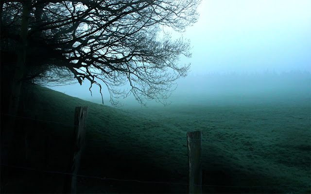 HD Background Foggy Forest