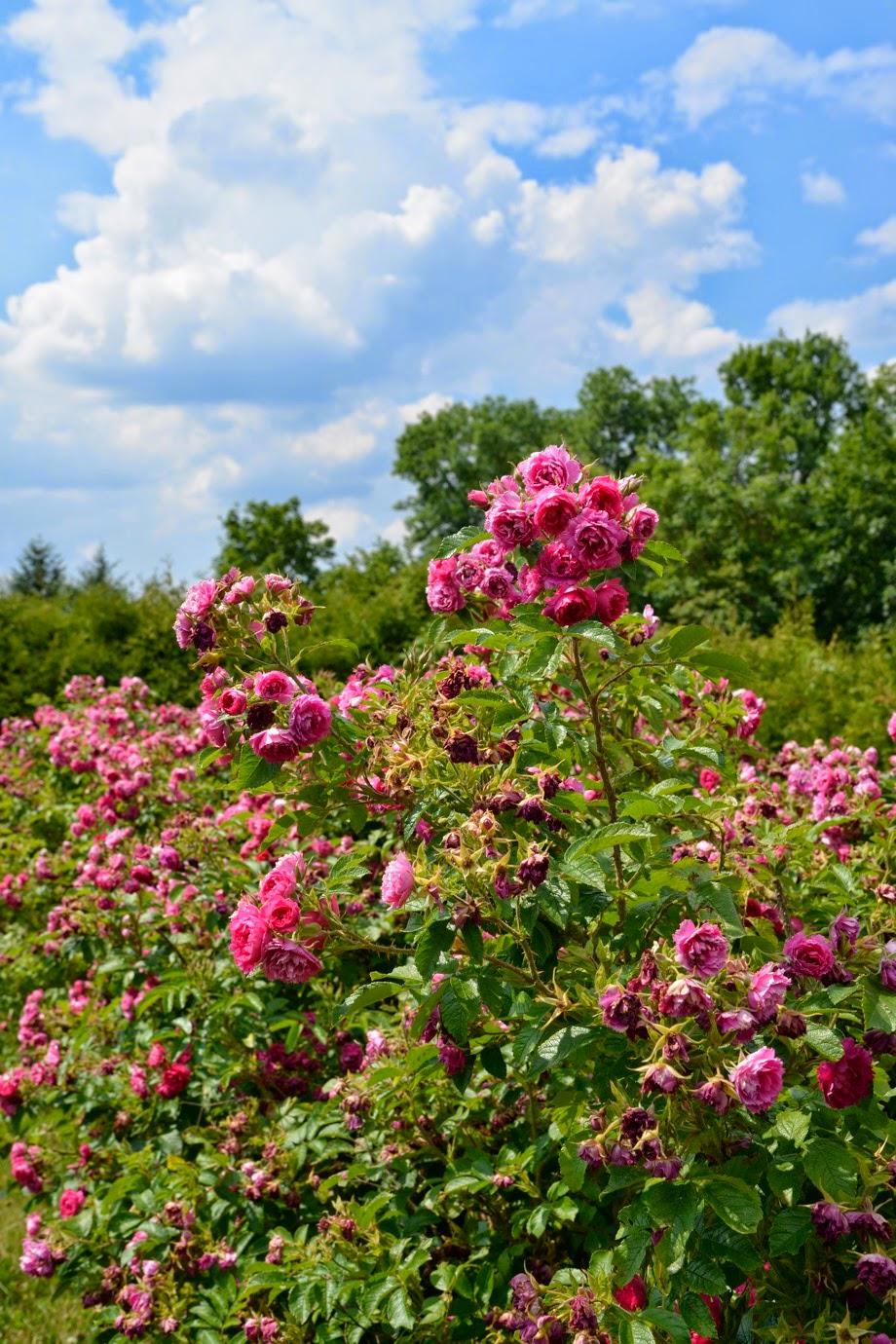 Dywyhsm a day at the weleda garden for Gardening 7 days to die