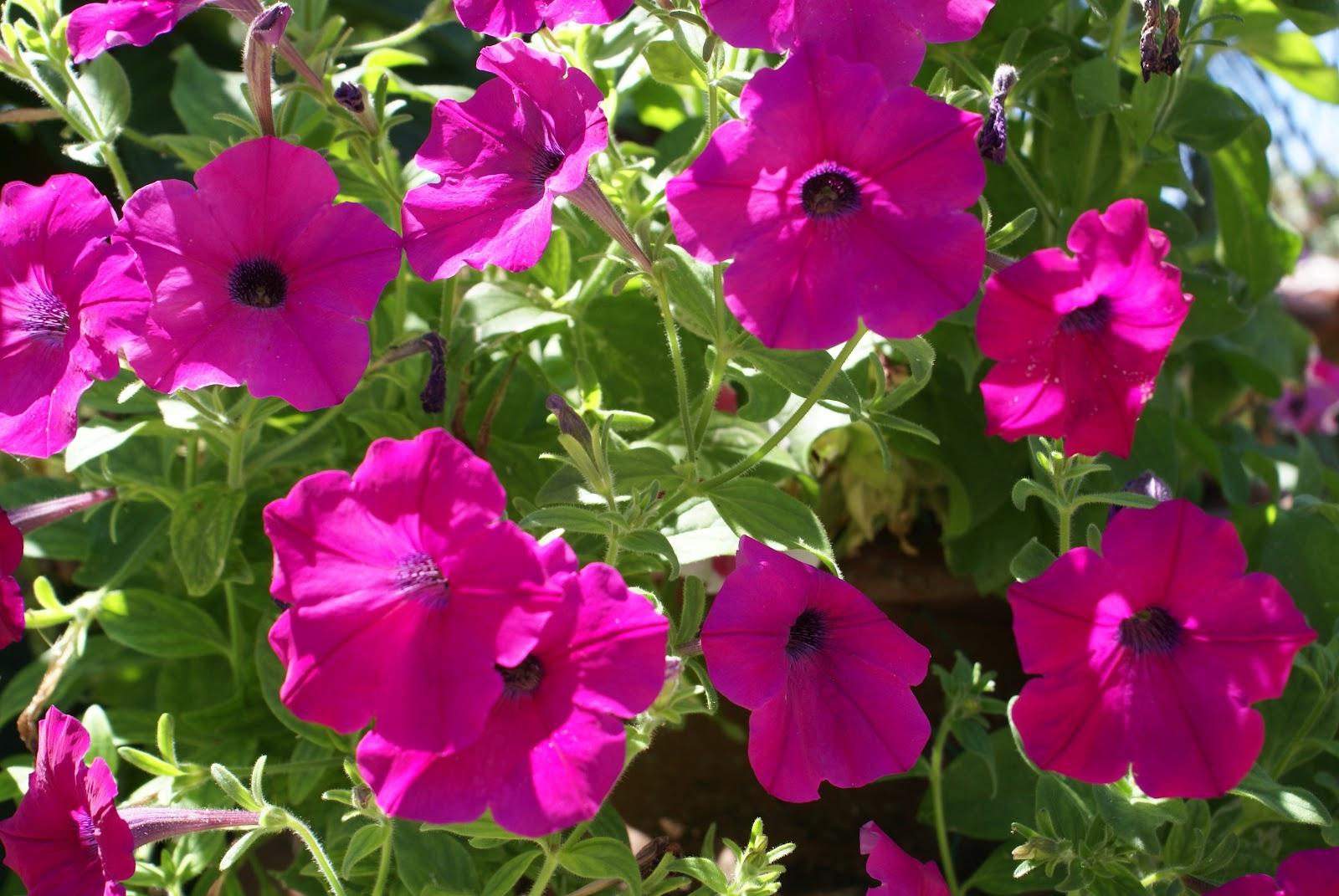 horta jardim e pomar: do jardim, do pomar e da horta: Mais um sábado de trabalho na horta