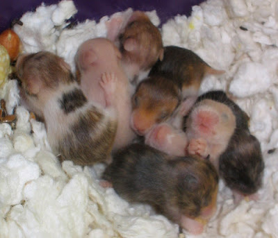 What Do Gerbils Eat And Drink