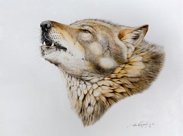 El pintor y la Naturaleza  Wildlife Art Lobo aullando