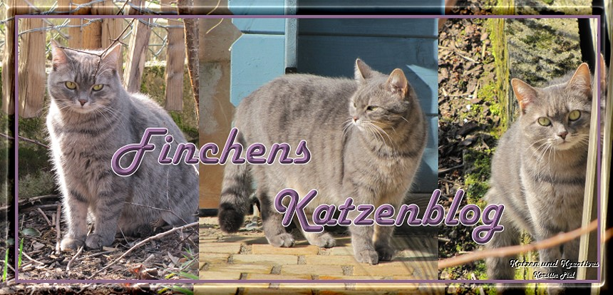 Finchens Katzen-Blog