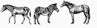 hagerman horse image