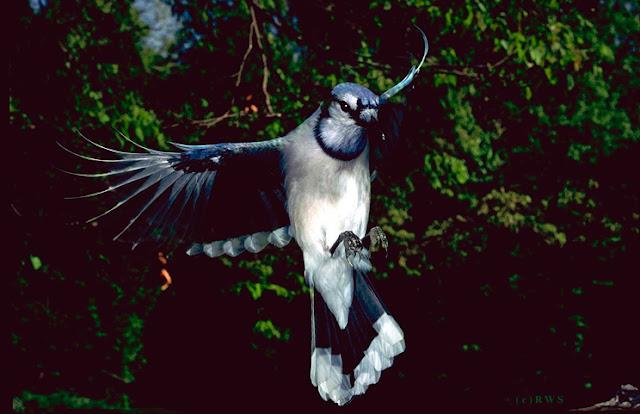 நான் பார்த்து ரசித்த புகைப்படங்கள் சில.... - Page 2 Flying+Birds+%252811%2529