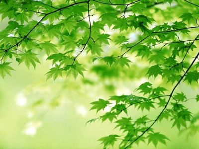 Pictures Nature Scenery Green Wallpaper Desktop Images Of Free Natural World