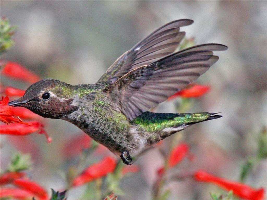 tải hình nền chim đẹp nhất