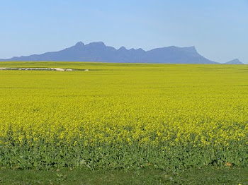 Canola and the Ranges