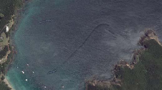Misteriosa 'criatura' marina descubierto en la bahía de Nueva Zelanda