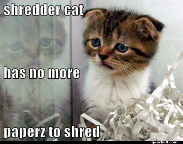 paper shredder cat