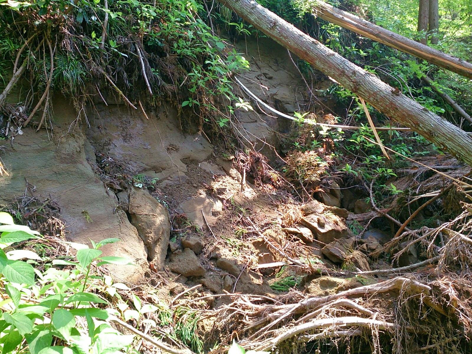 杉ごと崩れた斜面